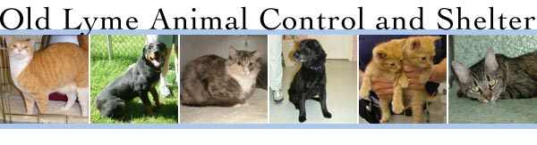 Old Lyme Animal Control and Shelter